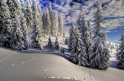 zimná krajinka