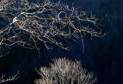 svetlo tieň a konáre stromu